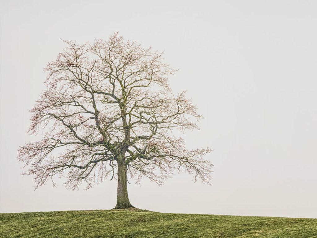 Beisetzung Baum Baumbestattung